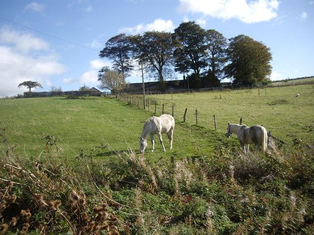 Horses at Hillhead