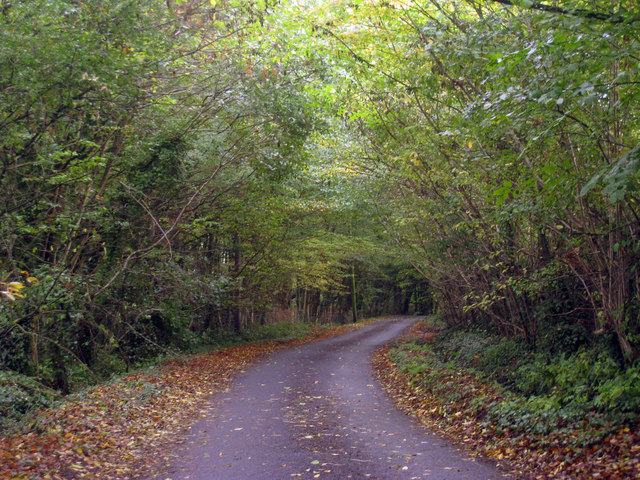 Chilsham Lane in Autumn
