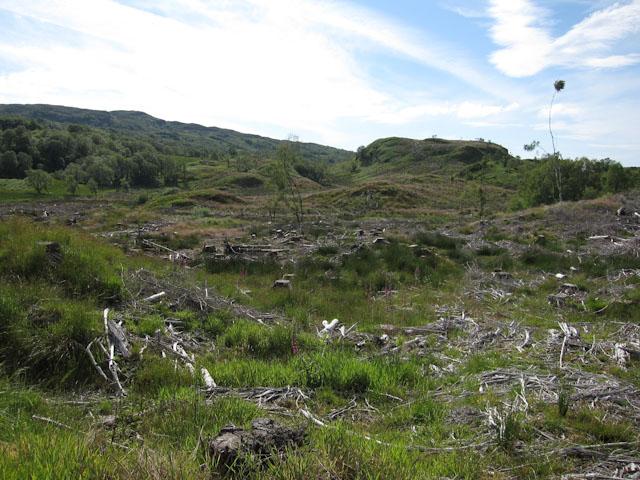 Forestry regeneration