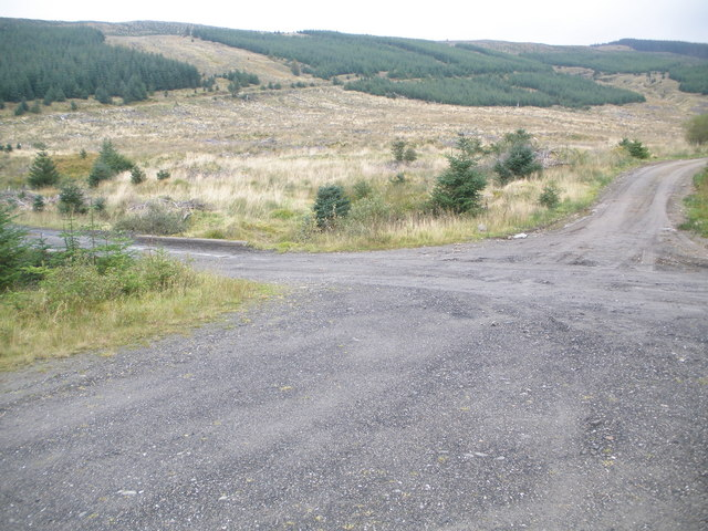 Junction of forest tracks