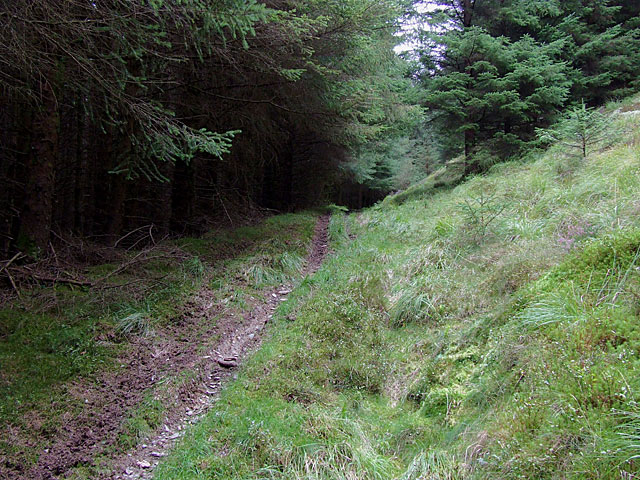 Bridleway to Abergwesyn, Tywi Forest, Powys