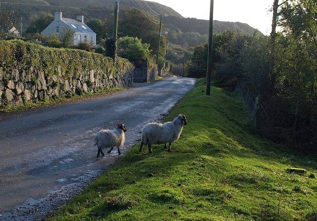 Sheep at Wotter