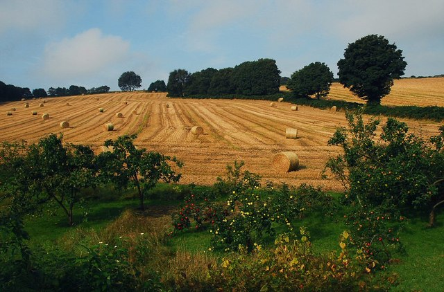 Orchard and Hay Bales