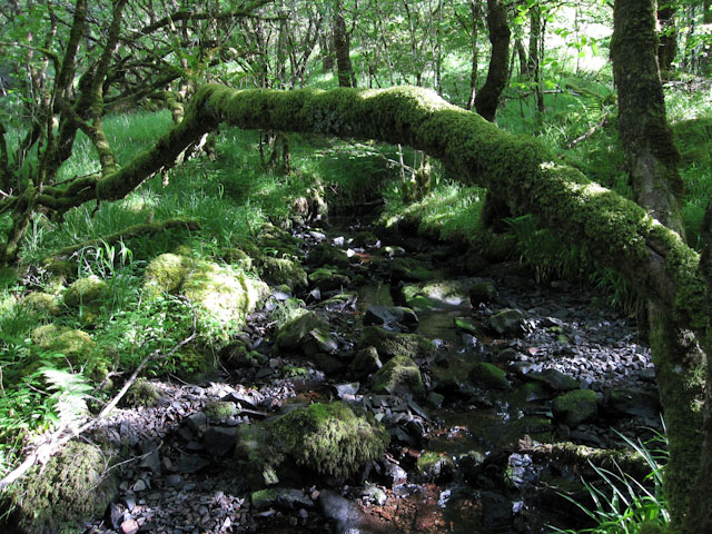 Stream through the woodland