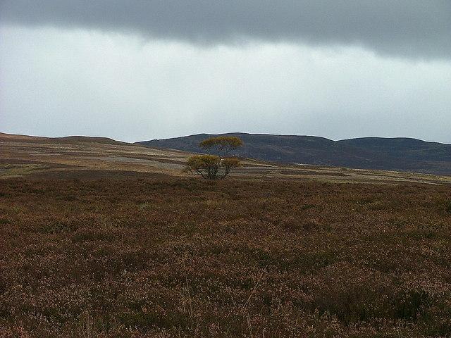 Lone tree at Càthar Mòr