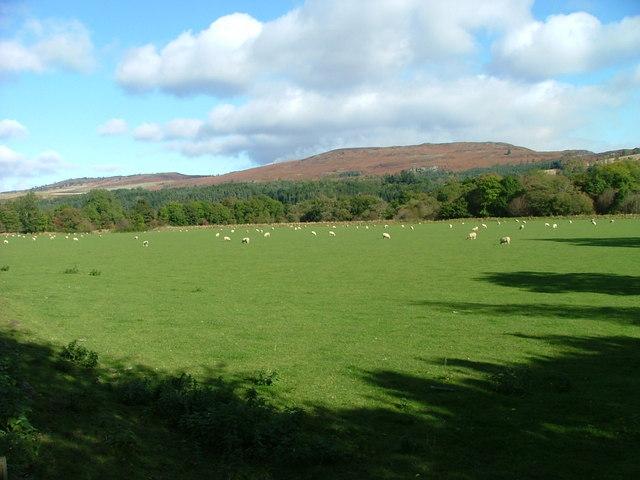 Pasture land at Glenalbert