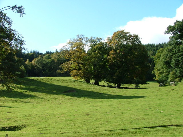 Trees on the Kinnaird Estate