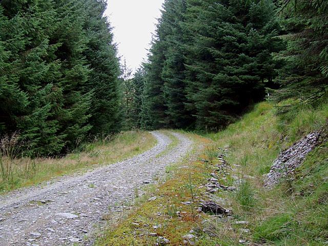 Forestry road near Nant yr Ych, Tywi Forest, Powys