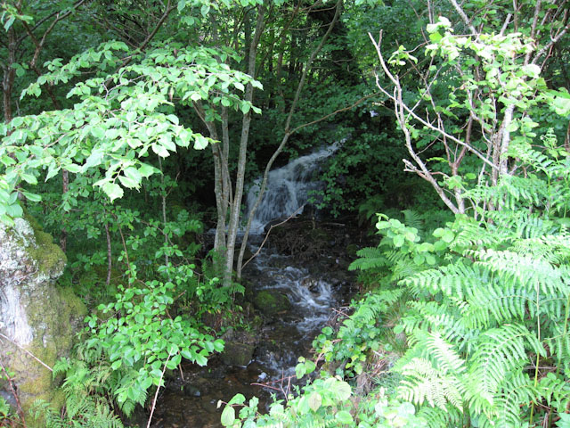 Stream approaching Loch Creran