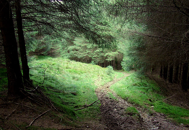 Bridleway through the Tywi Forest, Powys