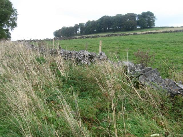 Towards Longedge Plantation