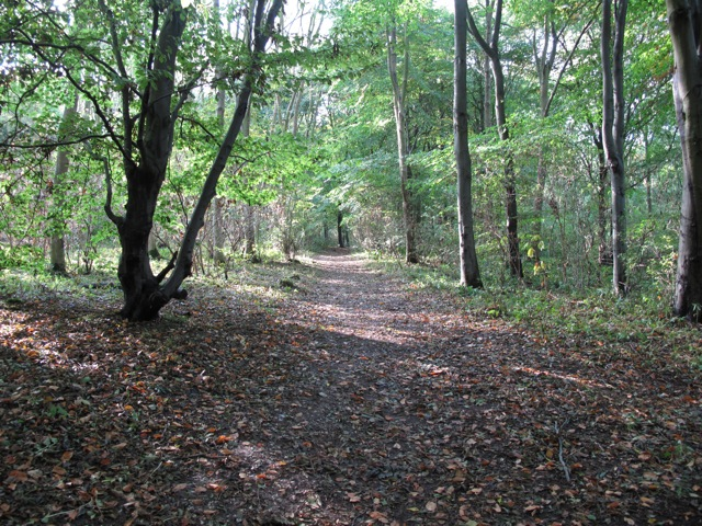 Woodland path in Nut Wood