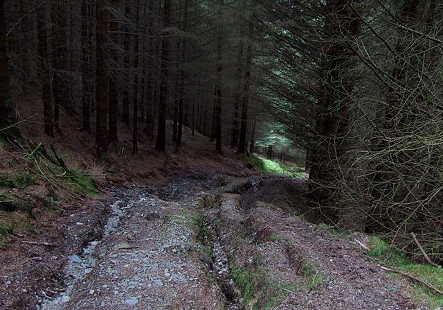 Tywi Forest bridleway descending into Cwm Tywi, Powys