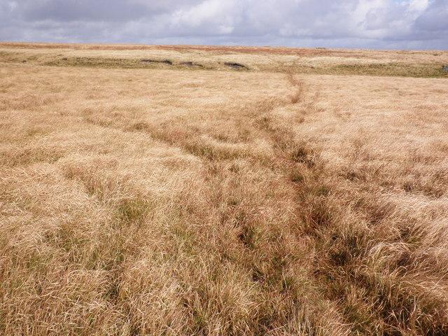 Moorland, near Mardle Head