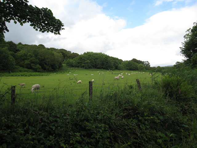 Sheep at North Shian