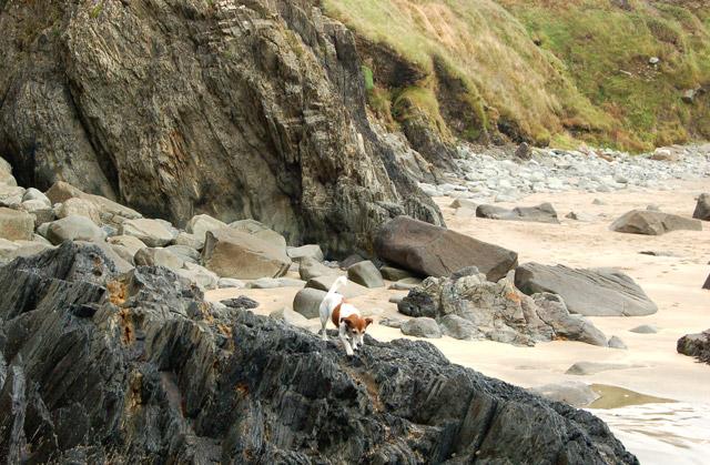 Rocky foreshore in Porthmelgan cove