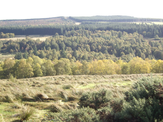 View towards Blackhill Wood