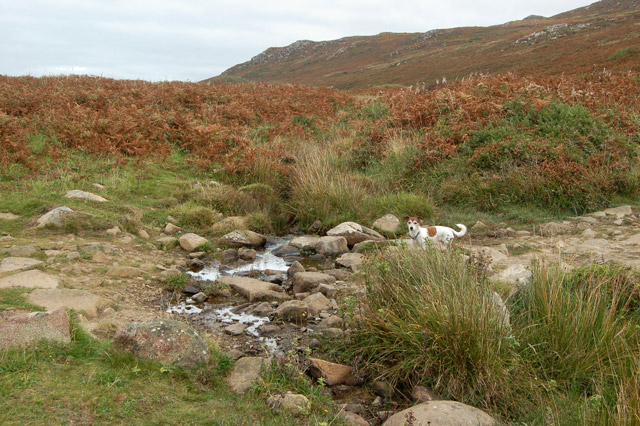 A stream in the moorland valley north of Carn Llidi