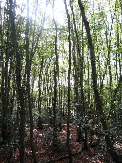 Mercers Wood