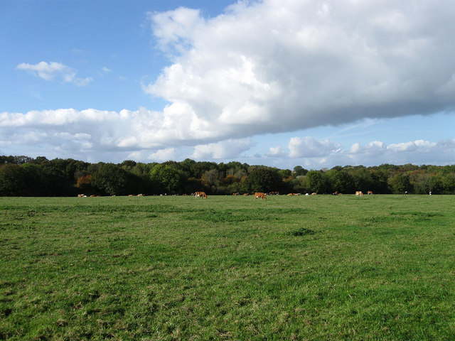 Upper Lambourne Field