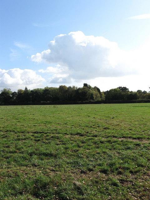 Bushy Field