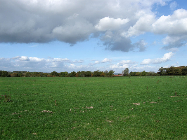 Roadway Field