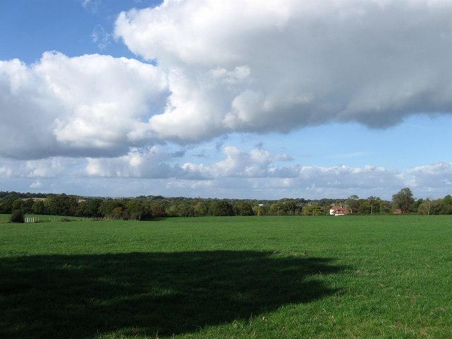 Hip Field