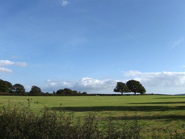Pond Field, East Chiltington