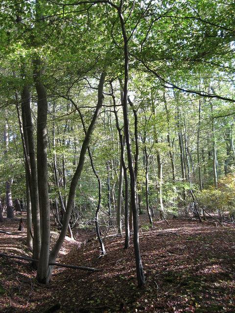 Lumberpit Wood