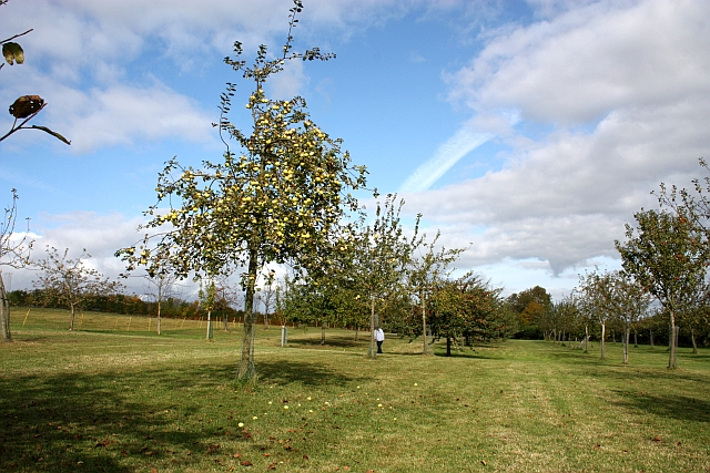 Orchard, Lyne Down