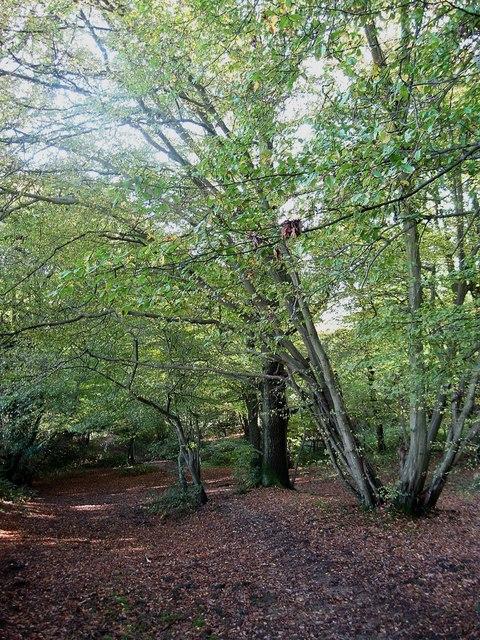 Lumberpit Lane