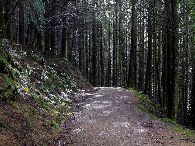 Track above Rhaeadr Peiran