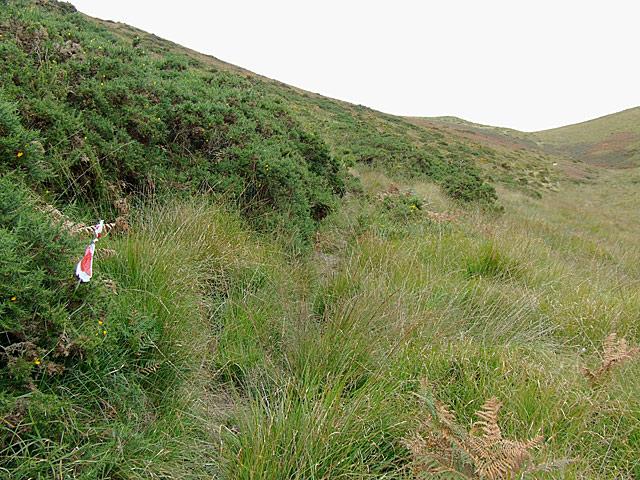 Bridleway up Cwm Gwrach to Abergwesyn, Powys