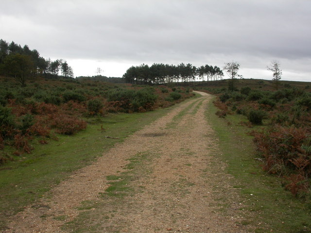 Dur Hill Inclosure, road