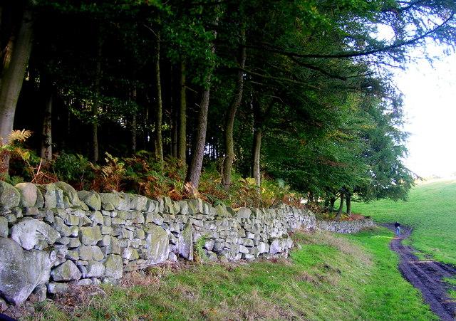 Edge of Plantation