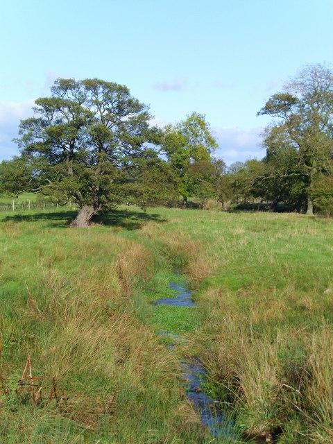 Spring fed stream near Burton Wood