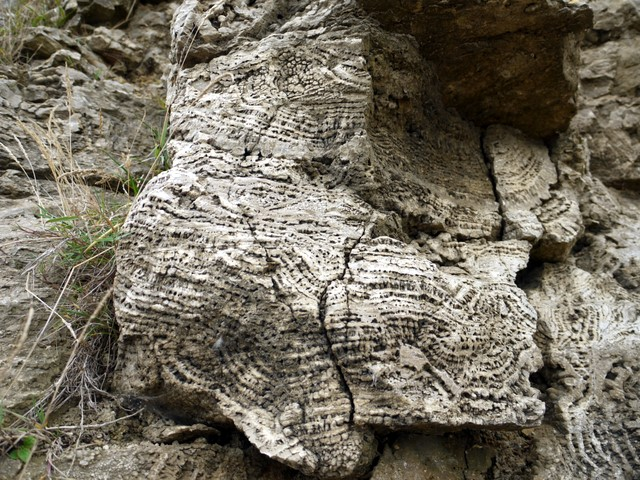 Cellular patterns in magnesian limestone