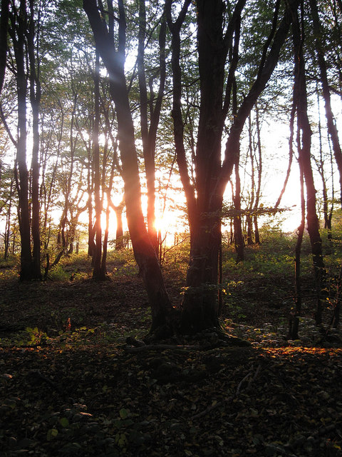 Sunset in West Wood