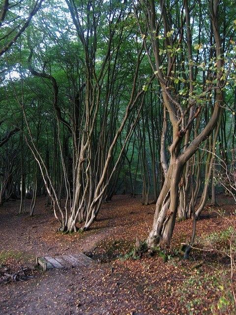Footbridge, Bushycommon Wood