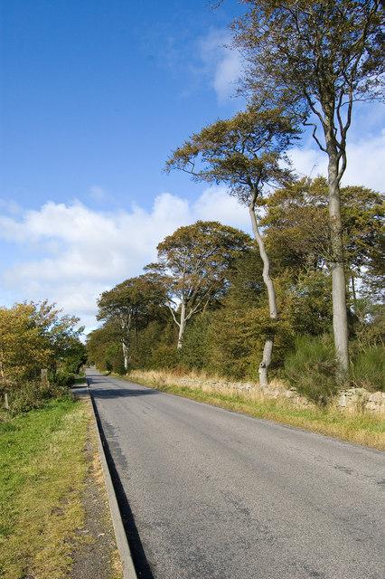 Whitestripes Road