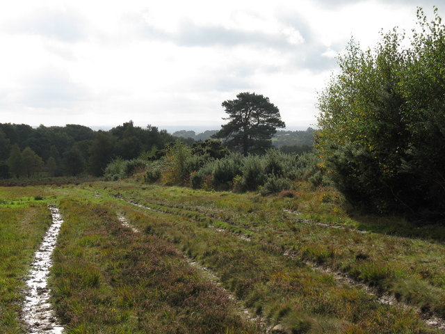 Multiple paths near Chelwood Vachery