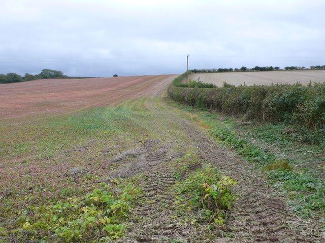 Countryside near Dewlish