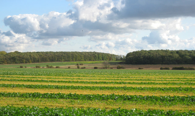 Fields towards Kingerby Wood