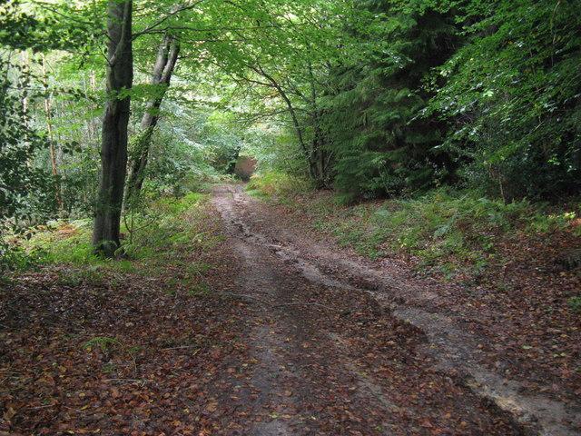 Track descending towards ponds near Dovecote Farm