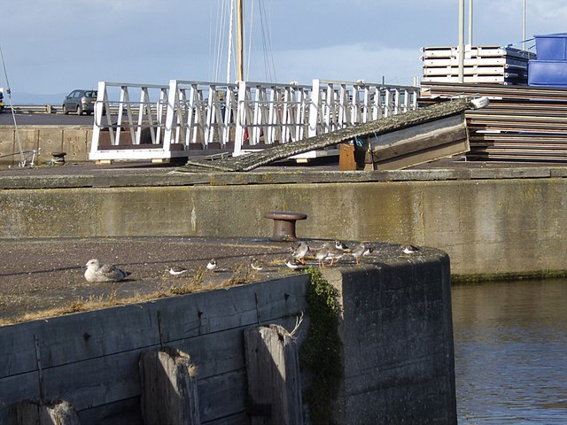 Birds on the harbour wall