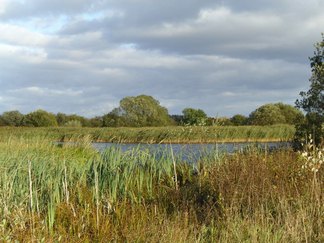 Reedbeds by the lagoon