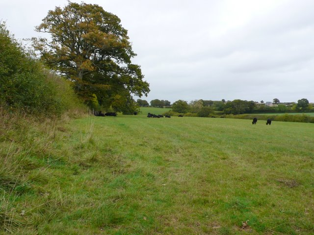 Pasture Field near Hazelbury Bryan