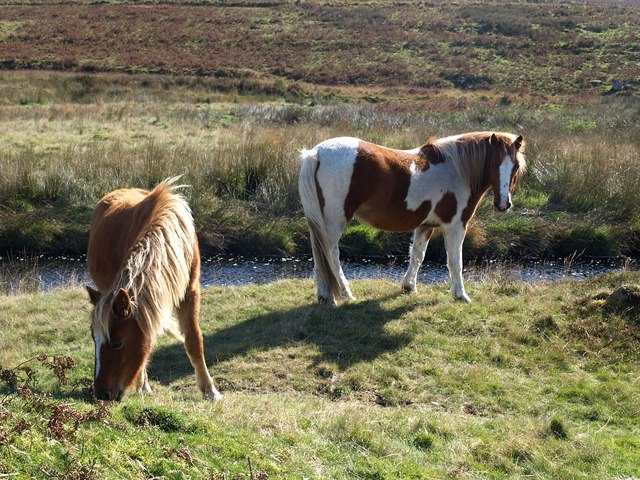 Ponies by the Plym