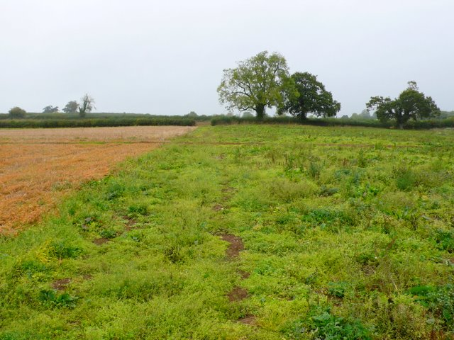 Bridle path near Puxey