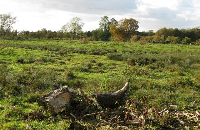 North Owersby field